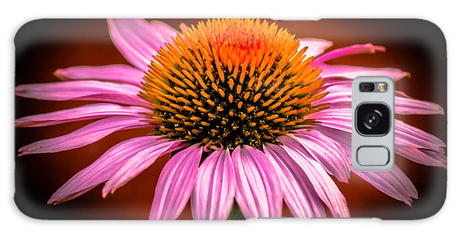 Flowers Galaxy S8 Case featuring the photograph Pink Flower by Jason Picard