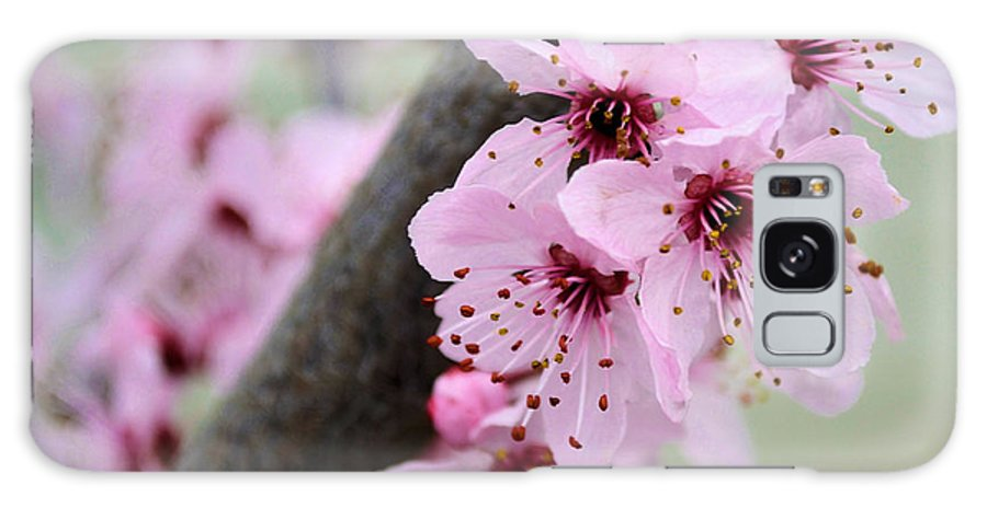Pink Galaxy S8 Case featuring the photograph Pink Flowers On A Flowering Tree by P S