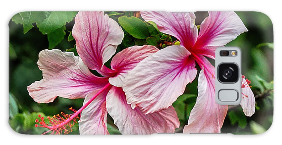 Hibiscus Galaxy S8 Case featuring the photograph Pink Hibiscus by Dan Dennison