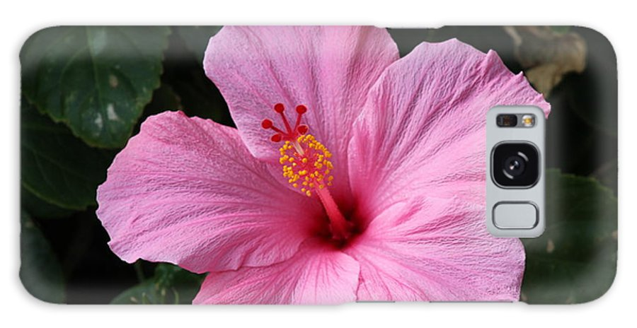 Florida Galaxy S8 Case featuring the photograph Pink Hibiscus by Nance Larson