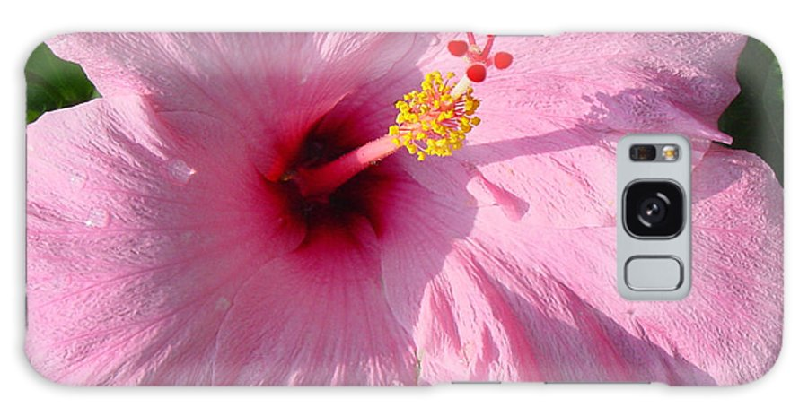 Pink Hibiscus Galaxy S8 Case featuring the photograph Pink Hibiscus by Suzanne Gaff