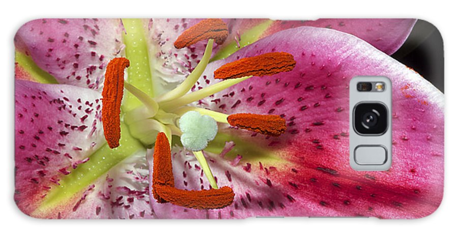 Lily Galaxy S8 Case featuring the photograph Pink Lily Up Close by Phyllis Denton