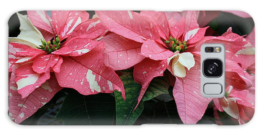 Flowers Galaxy S8 Case featuring the photograph Pink Marble Poinsettia by Kathy DesJardins