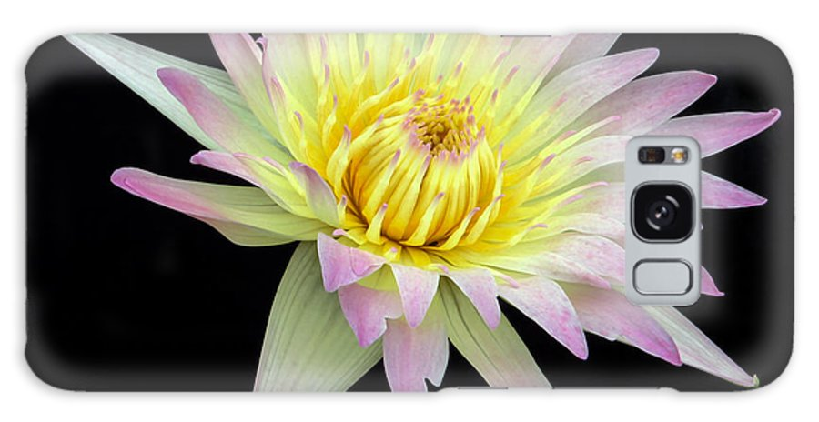 Landscape Galaxy S8 Case featuring the photograph Pink N Yellow Water Lily Too by Sabrina L Ryan