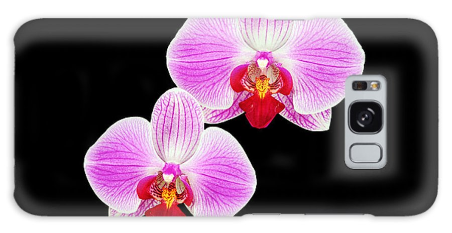 Background Galaxy S8 Case featuring the photograph Pink Orchid by Boyd E Van der Laan