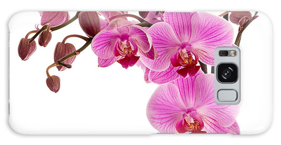 Orchid Galaxy S8 Case featuring the photograph Pink Orchid by Judith Flacke