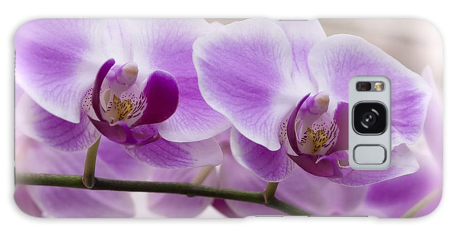 Pink Orchid Galaxy S8 Case featuring the photograph Pink Orchid by Saija Lehtonen