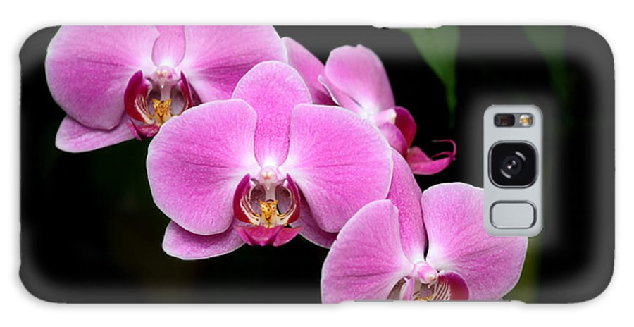 Amazing Galaxy S8 Case featuring the photograph Pink Orchids In A Row by Sabrina L Ryan