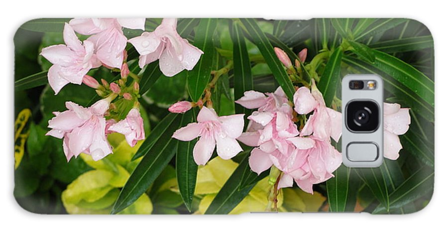 Flowers Galaxy S8 Case featuring the photograph Pink Passion by Cheryl Turner