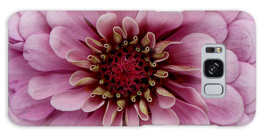 Flower Galaxy S8 Case featuring the photograph Pink Passion by Erin Tucker