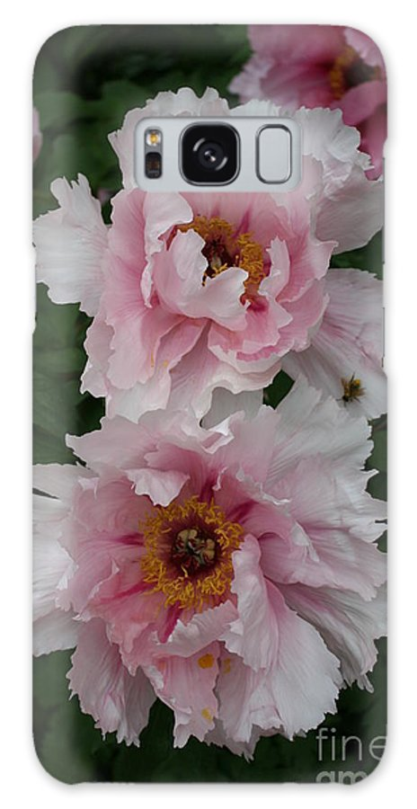 Flowers Galaxy S8 Case featuring the photograph Wild Pink Peony by Christiane Schulze Art And Photography