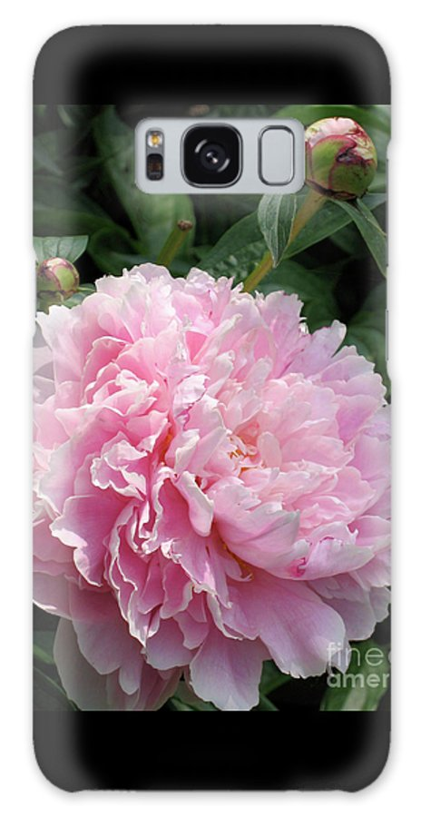 Peony Galaxy S8 Case featuring the photograph Pink Peony by Ann Horn