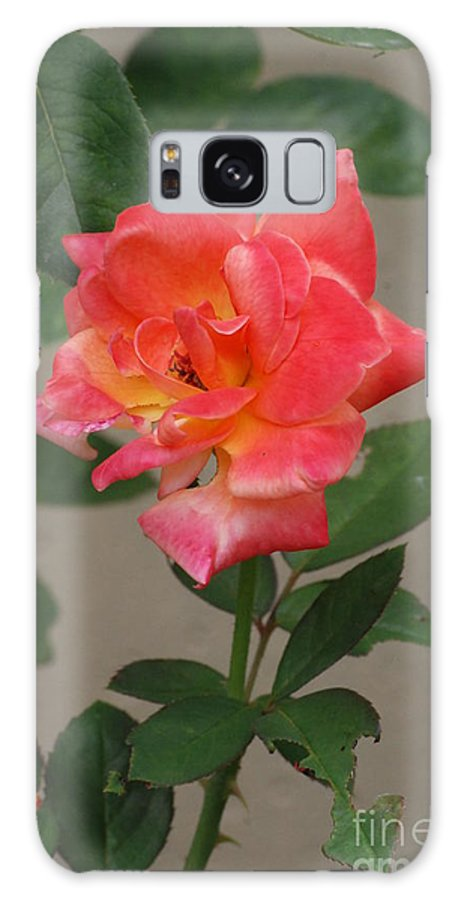Flower Galaxy S8 Case featuring the photograph Pink Rose by Mark McReynolds
