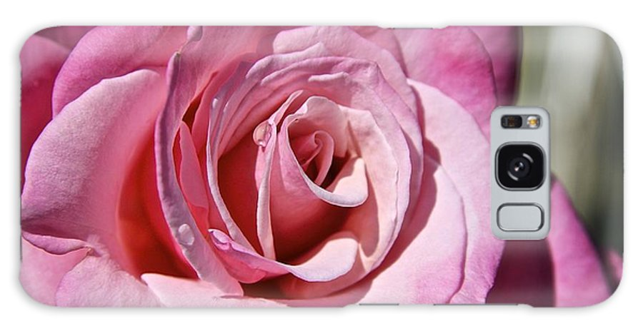 Pink Rose Galaxy S8 Case featuring the photograph Pink Rose by Sean Rathbun