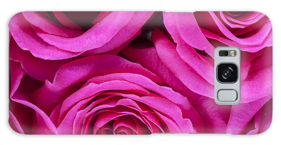 Pink Roses Galaxy S8 Case featuring the photograph Pink Roses 2 by Rich Franco
