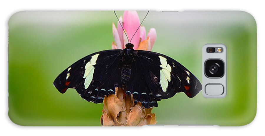 Ryan Hedrick Galaxy S8 Case featuring the photograph Pink Tip Butterfly by Ryan Hedrick