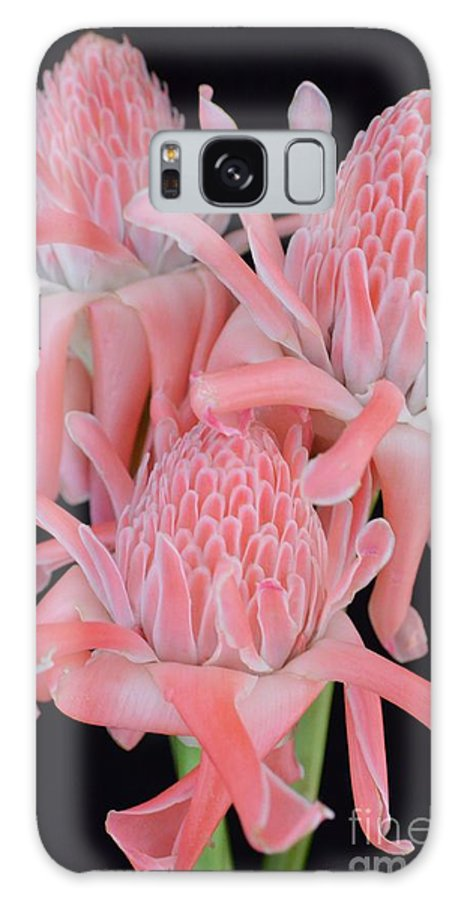 Flowers Galaxy S8 Case featuring the photograph Pink Torch Ginger Trio On Black - No 2 by Mary Deal