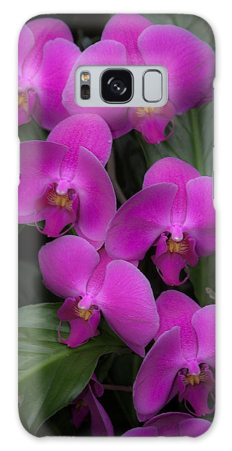 Flower Galaxy S8 Case featuring the photograph Pink Water Fall by Paul Slebodnick