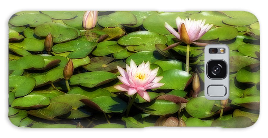 Horizontal Galaxy S8 Case featuring the photograph Pink Water Lilies Soft Focus by Sally Rockefeller