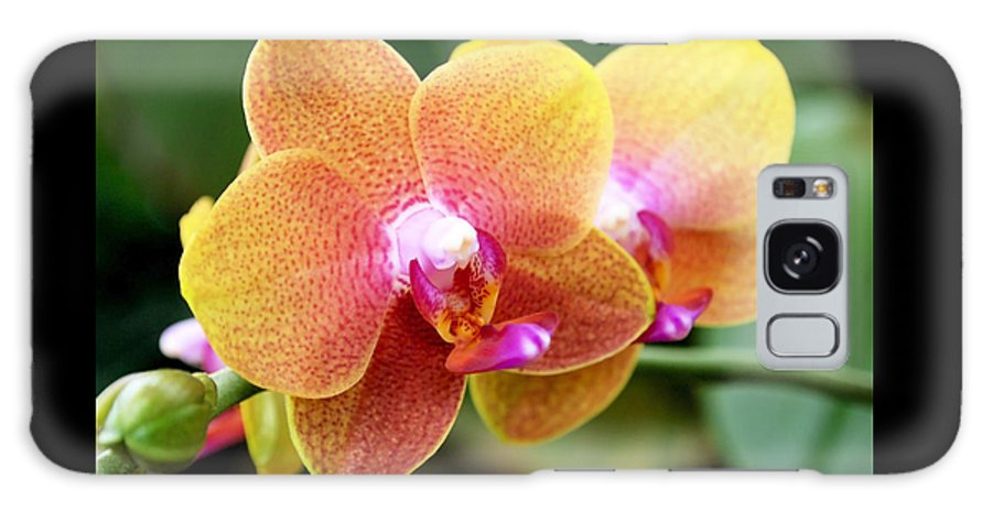 Orchid Galaxy S8 Case featuring the photograph Pink Yellow Orchid by Rona Black