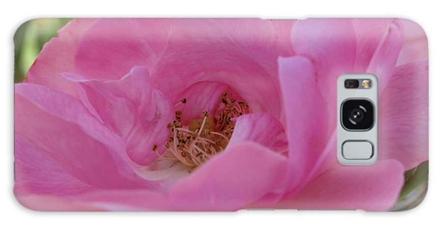 Pink Galaxy S8 Case featuring the photograph Pinky by Jacklyn Duryea Fraizer