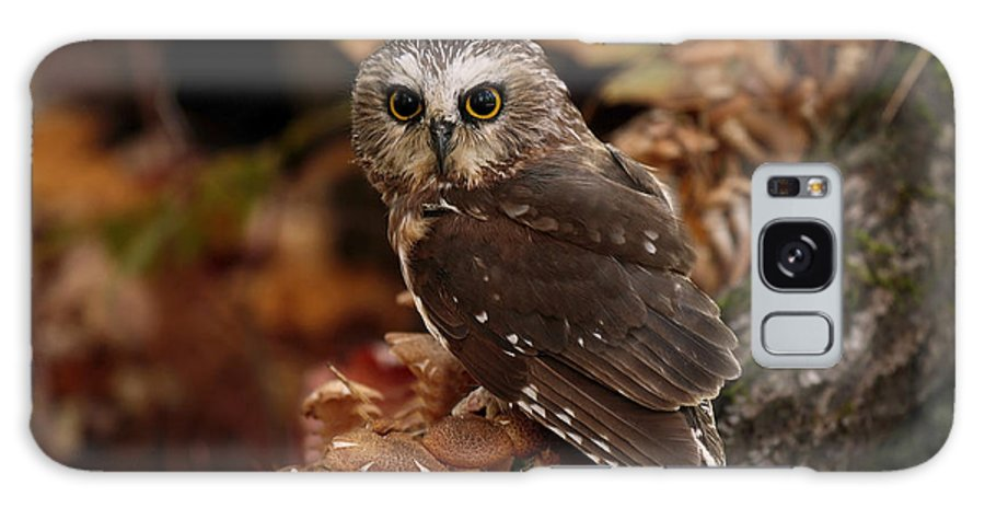 Saw Whet Owl Galaxy S8 Case featuring the photograph Pixie Saw Whet Owl Watching You by Inspired Nature Photography Fine Art Photography