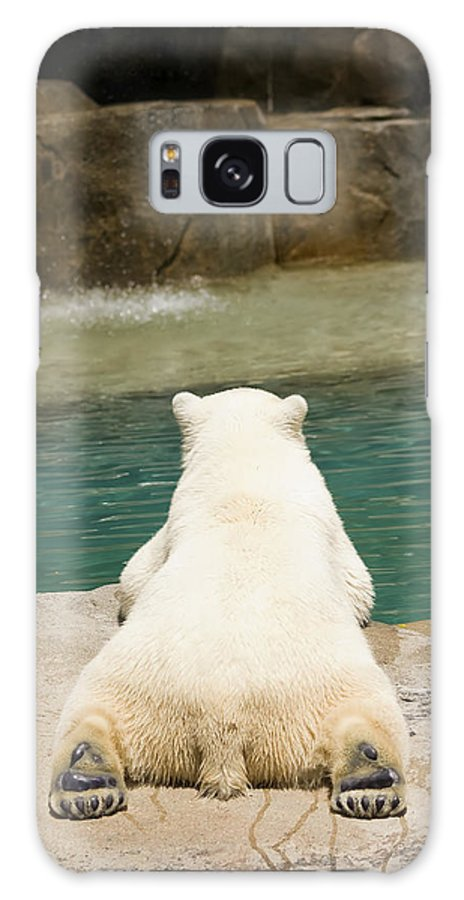 3scape Photos Galaxy S8 Case featuring the photograph Playful Polar Bear by Adam Romanowicz