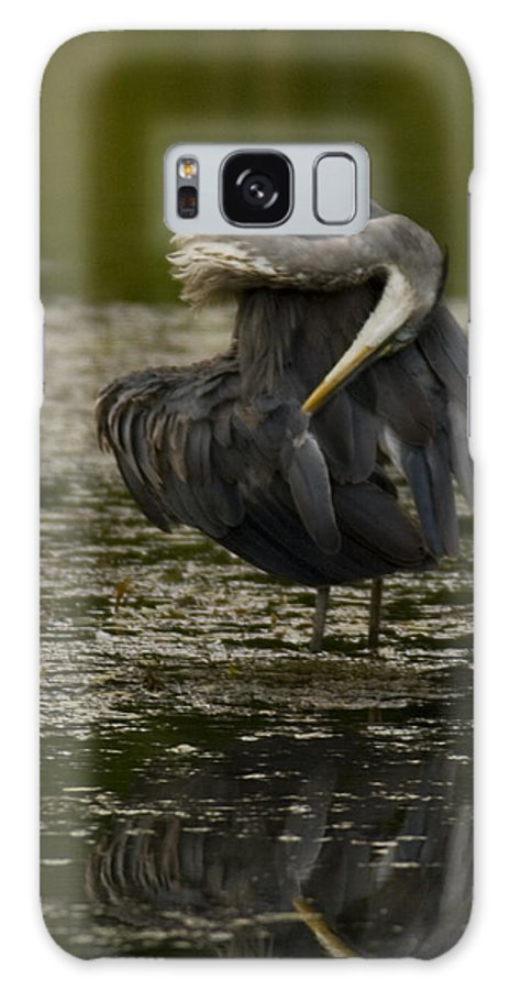 Great Blue Heron Galaxy S8 Case featuring the photograph Plumage Perfection by Crystal Heitzman Renskers