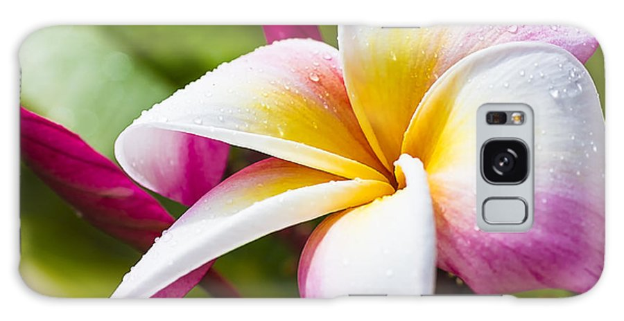 Bloom Galaxy S8 Case featuring the photograph Plumeria 2 by Leigh Anne Meeks