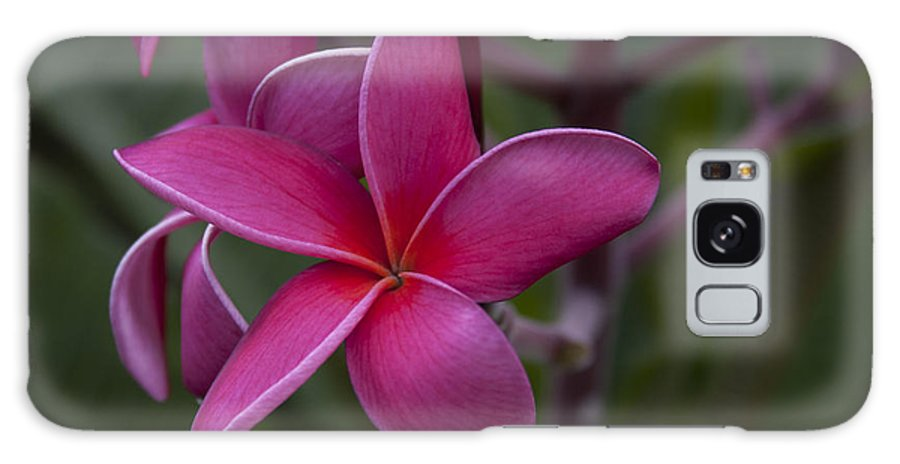 Plumeria Galaxy S8 Case featuring the photograph Plumeria by Randy Bayne