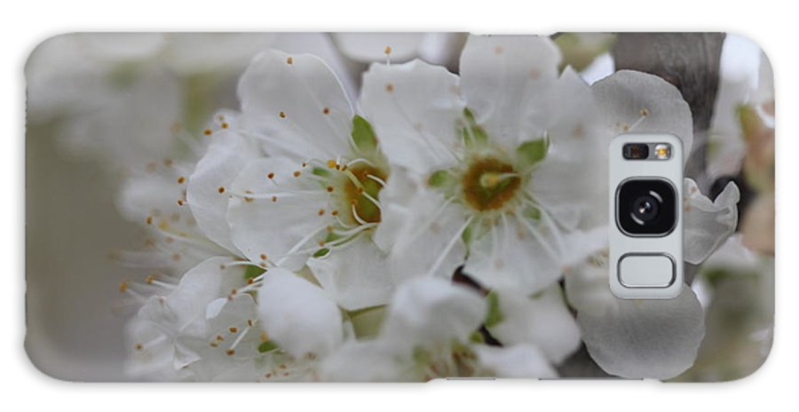 Plum Galaxy S8 Case featuring the photograph Plums In Bloom by Ashley Hunt