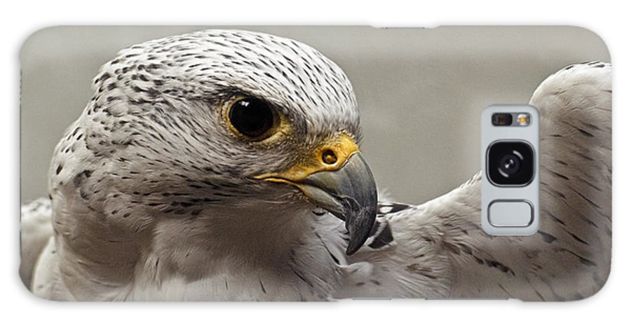 Point Defiance Gryfalcon Galaxy S8 Case featuring the photograph Point Defiance Gryfalcon by Wes and Dotty Weber