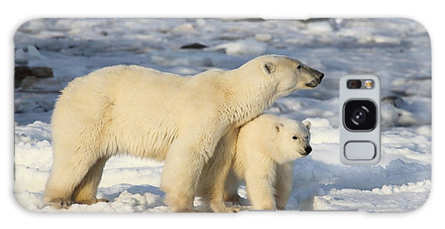 Polar Bears Galaxy S8 Case featuring the photograph Polar Bear Mother And Cub by Carole-Anne Fooks