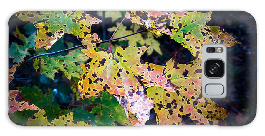 Polka Dot Autumn Galaxy S8 Case featuring the photograph Polka Dot Autumn by JP McKim