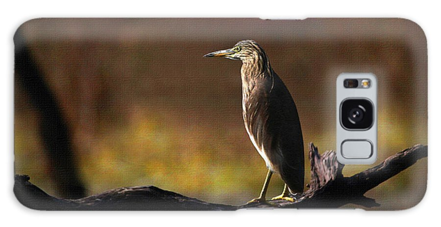 Pond Heron Galaxy S8 Case featuring the photograph Pond Heron by Milind Waichal