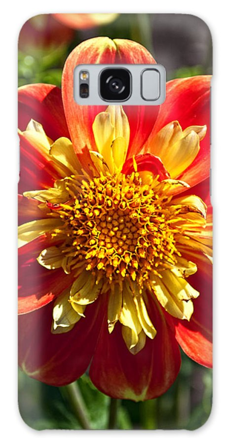 Pooh Dahlia Flower Galaxy S8 Case featuring the photograph Pooh Dahlia Flower by Thomas J Rhodes