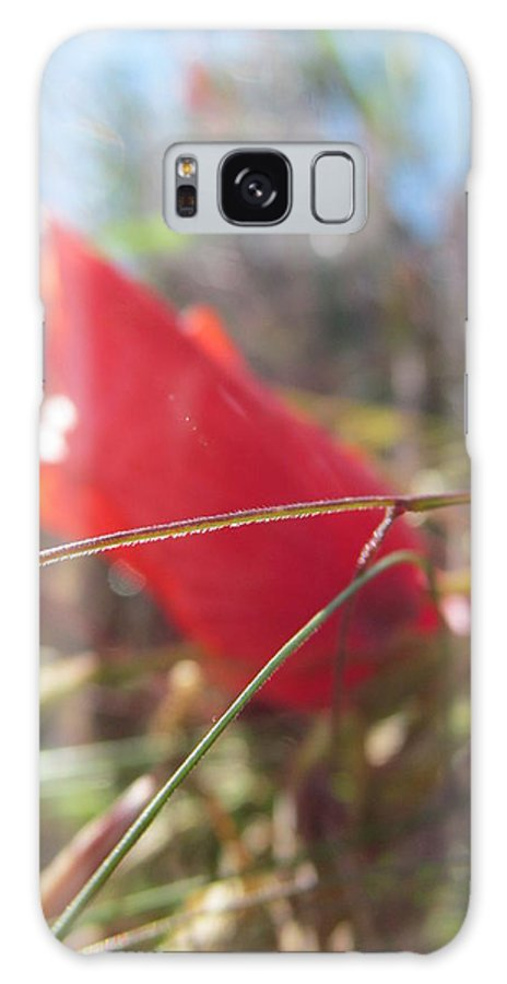 Bornholm Galaxy S8 Case featuring the photograph Poppies Dying by Chepcher Jones