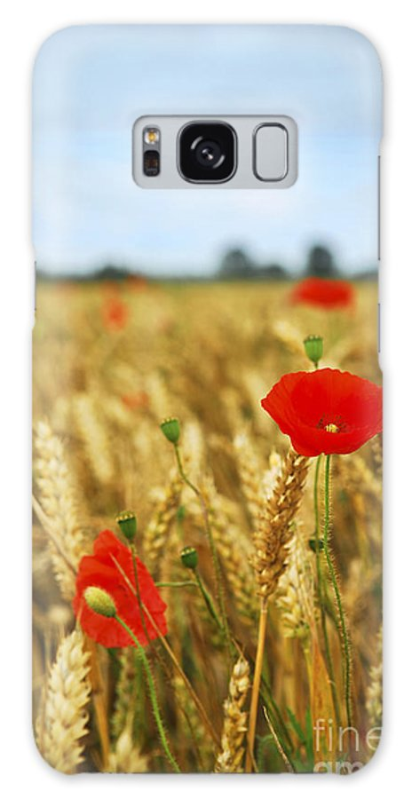Poppy Galaxy S8 Case featuring the photograph Poppies In Grain Field by Elena Elisseeva