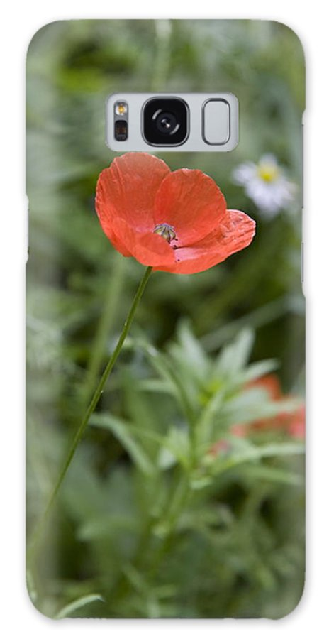 Poppy Galaxy S8 Case featuring the photograph Poppies In Park In Arnhem Netherlands by Ronald Jansen