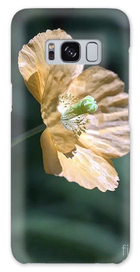 Poppy Orange Galaxy Case featuring the photograph Poppy by Tony Cordoza