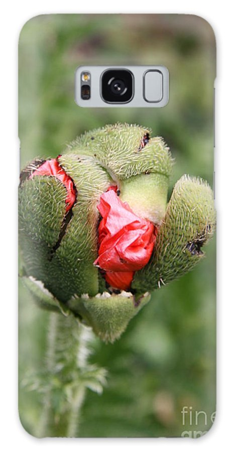 Flowers Galaxy S8 Case featuring the photograph Poppybud by Christiane Schulze Art And Photography