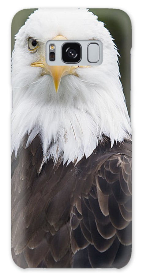 Bald Eagle Galaxy S8 Case featuring the photograph Portrait Of A Bald Eagle In Gaspesie by Philippe Henry