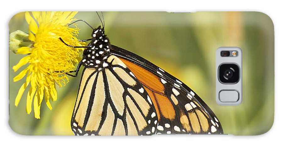 Monarch Galaxy S8 Case featuring the photograph Portrait Of A Monarch by Penny Meyers