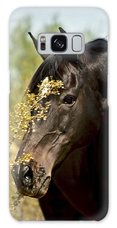 Horse Galaxy Case featuring the photograph Portrait Of A Thoroughbred by Kathy McClure