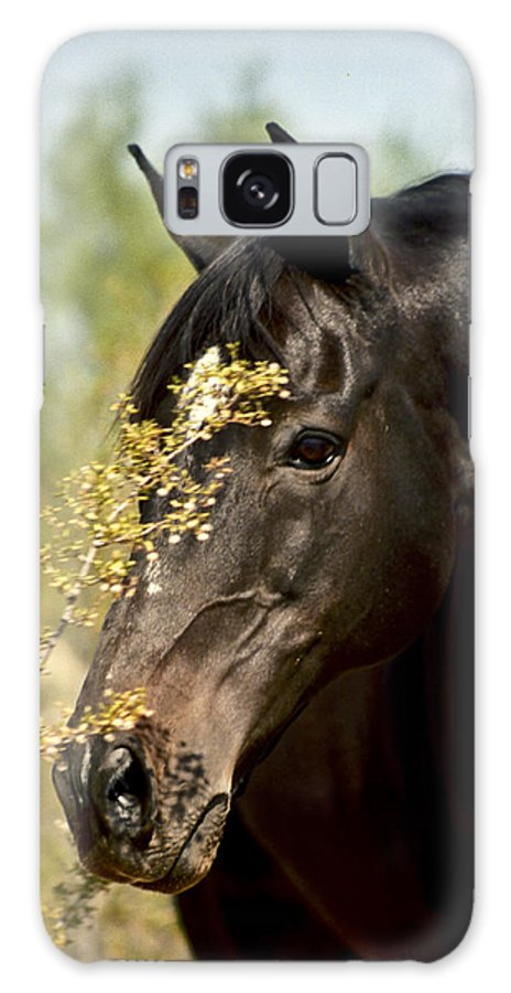 Horse Galaxy S8 Case featuring the photograph Portrait Of A Thoroughbred by Kathy McClure
