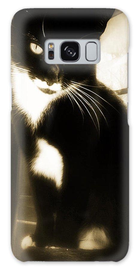 Tuxedo Galaxy S8 Case featuring the photograph Portrait Of A Tuxedo Cat Iv by Aurelio Zucco