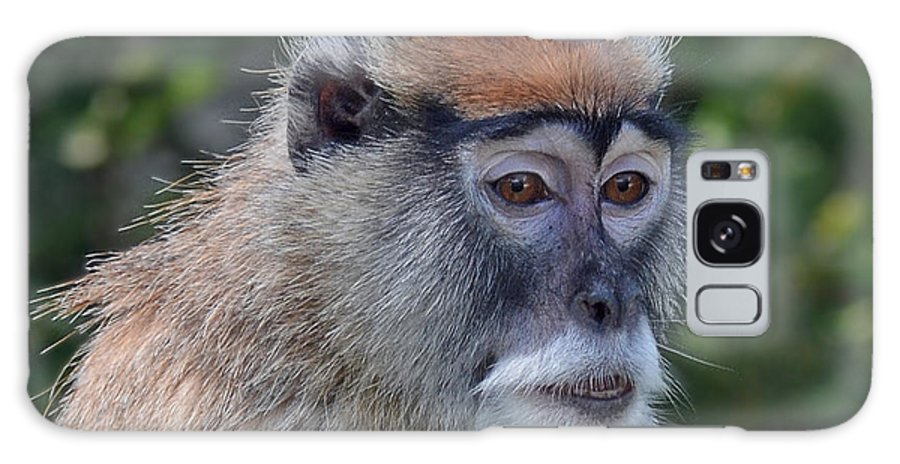 Portrait Of A Patas Monkey Galaxy S8 Case featuring the photograph Portrait Of An Adult Patas Monkey II by Jim Fitzpatrick