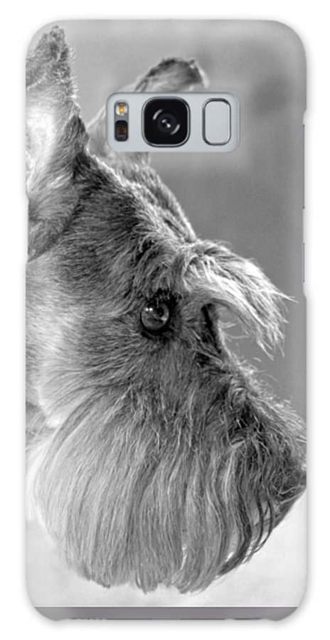 Miniature Schnauzer Galaxy S8 Case featuring the photograph Portrait Of Gretl by Andrea Lazar