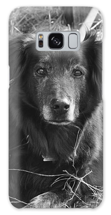 Dog Galaxy S8 Case featuring the photograph Portrait Of Jake by Valerie Kirkwood