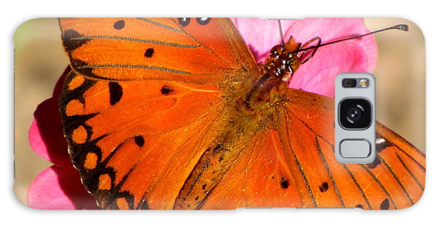 Butterfly Galaxy S8 Case featuring the photograph Posing For Photos by Karen Beasley